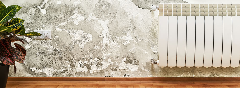 Black Mold Removal Vancouver